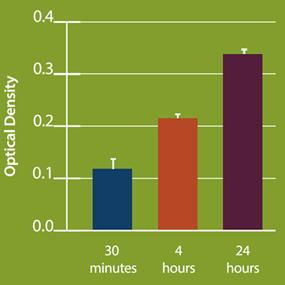 肝細胞は尿素を分泌し、時間依存的に濃度を増す。
