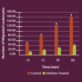 インヒビターの存在下では、遊走が顕著に低下する(75%超)。